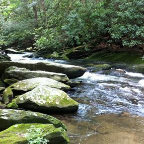 Jacks River - Cohutta Wilderness