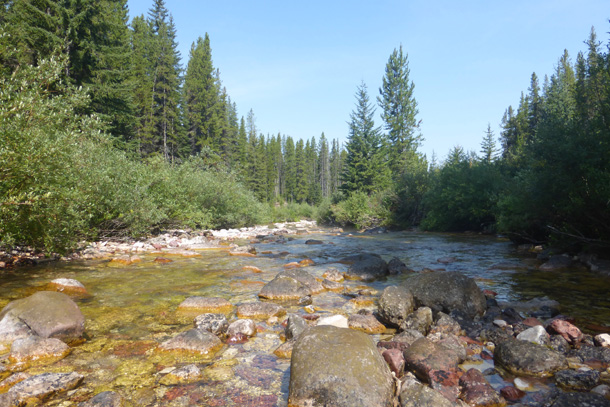 Beautiful cold creek next to the campsite. I even managed a 'shower' laying down in a deep spot.